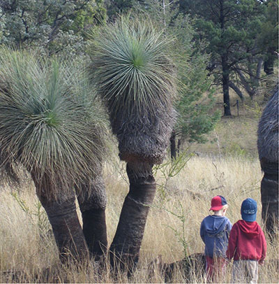 grass_trees_kids