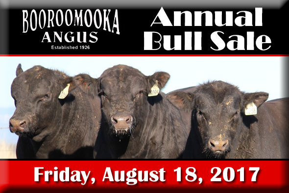 2017 Annual Booroomooka Bull Sale