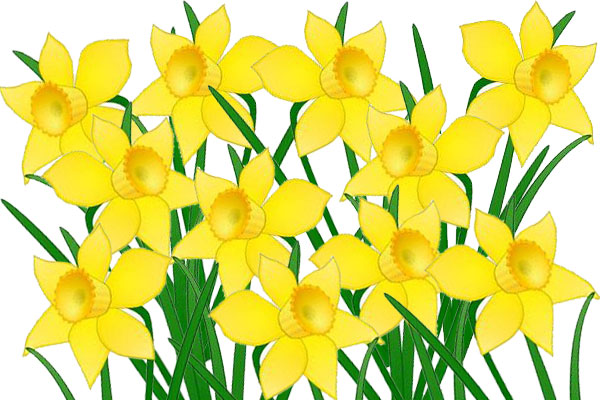 Buy a daffodil for someone you know on Friday, 25 August