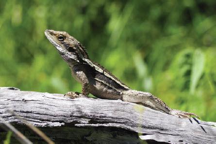 Geckoe
