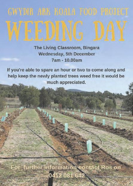 Gywdir Ark Koala Food Project Weeding Day