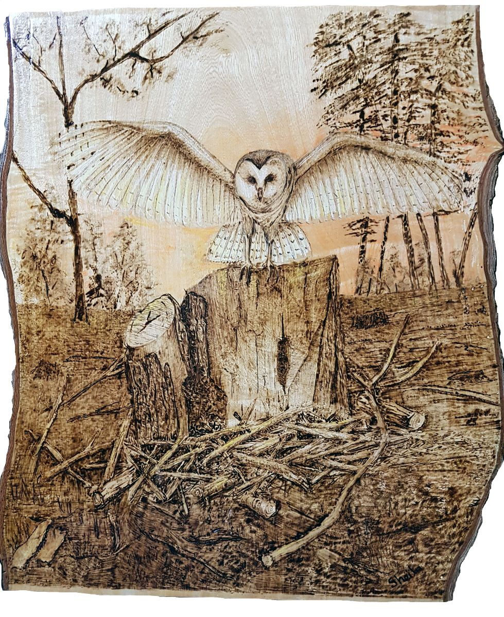 Night Owl, pyrography on jacaranda wood by Sheila Turbefield. 45 x 40 cm.