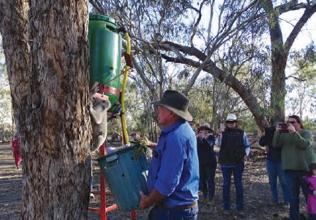 Koala drinker