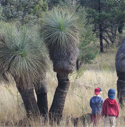 grass_trees_kids