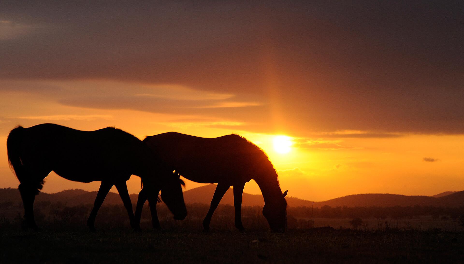 Horses grazing at Peranjou