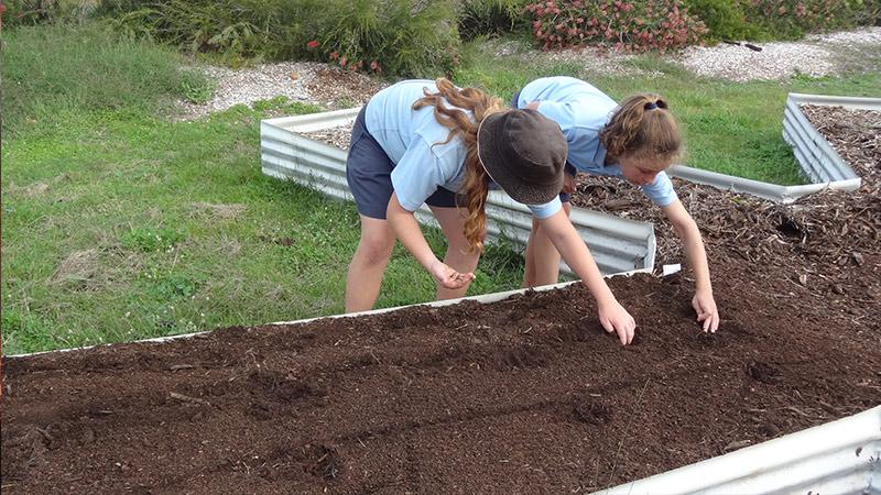 Students building Mandolin Gardens at The Living Classroom